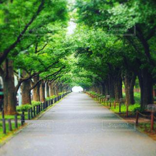 晴れた日に散歩したくなるまっすぐな道を囲む木のトンネル。の写真・画像素材[966194]