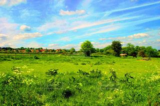 緑豊かな野原で放牧する馬の群れの写真・画像素材[2230447]