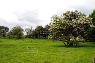 背景に木がある大きな緑の牧場の写真・画像素材[2432675]