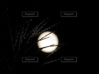満月とすすきの写真・画像素材[3771249]