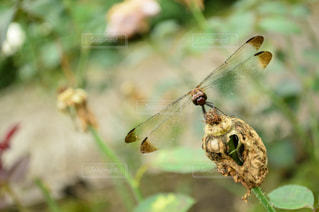 自然の写真・画像素材[235096]