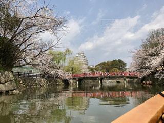 堀からみた桜と姫路城の写真・画像素材[2281014]