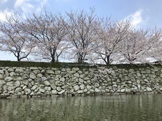 姫路城の堀から見える桜の写真・画像素材[2281034]
