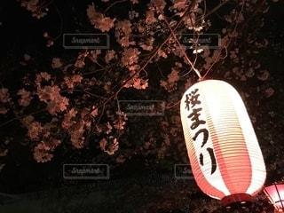 桜と提灯の写真・画像素材[2281048]