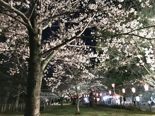桜と屋台の写真・画像素材[2281049]