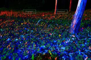 童話の森の写真・画像素材[2232628]