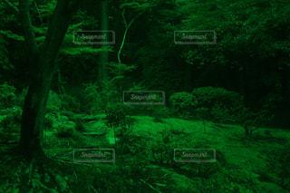 緑にも程がある森の写真・画像素材[2232660]