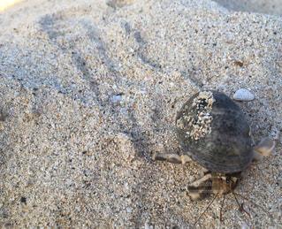 砂浜のヤドカリの写真・画像素材[2233025]
