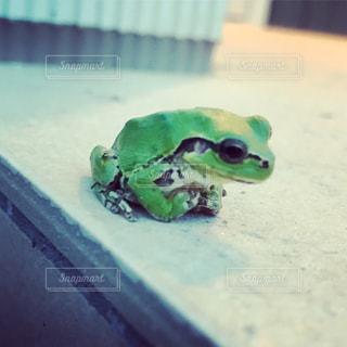 蛙くんの写真・画像素材[2235965]