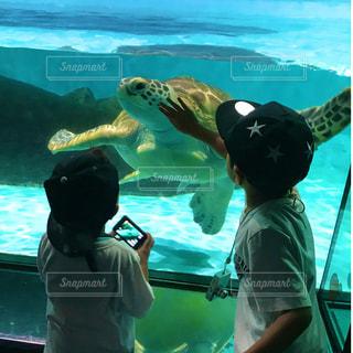 ウミガメの写真・画像素材[2236454]