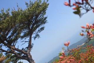 徳仙丈山の写真・画像素材[2236424]