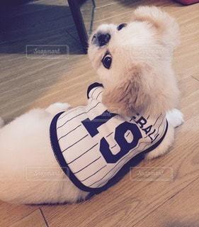 犬の写真・画像素材[115287]