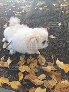 犬の写真・画像素材[116689]