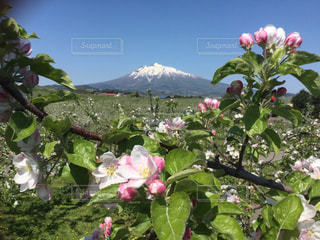 津軽富士の写真・画像素材[2236762]