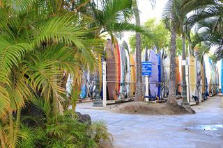 ワイキキビーチのサーフボードロッカーの写真・画像素材[3355975]