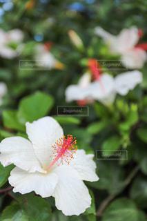 花のクローズアップの写真・画像素材[3364339]