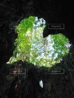 自然の写真・画像素材[88851]