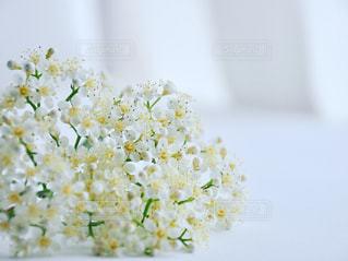 花のクローズアップの写真・画像素材[3307278]