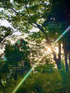 森林浴の写真・画像素材[2237858]