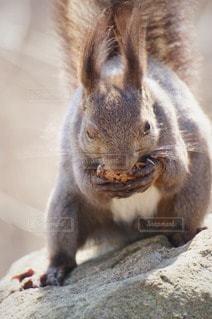 野生動物の写真・画像素材[88658]