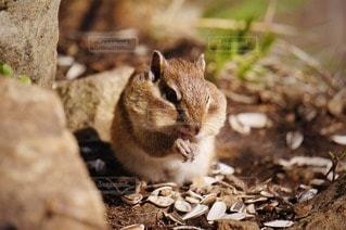 野生動物の写真・画像素材[88659]