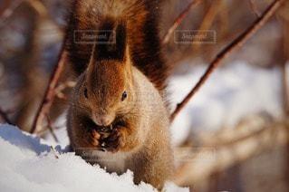 野生動物の写真・画像素材[88683]