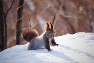 野生動物の写真・画像素材[88702]