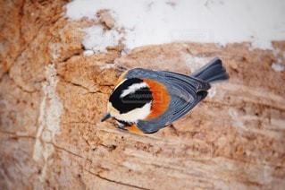鳥の写真・画像素材[88823]