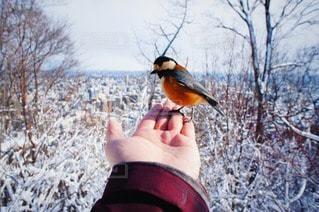 鳥の写真・画像素材[88825]