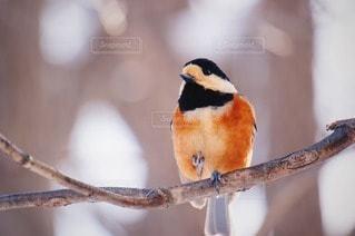 鳥の写真・画像素材[88843]