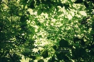 森林 - No.90704