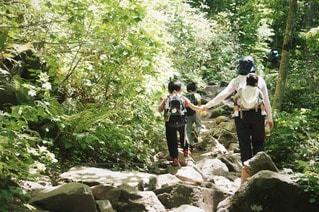 森林の写真・画像素材[90740]