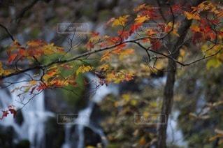 自然の写真・画像素材[97751]