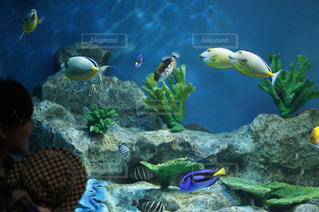 魚の写真・画像素材[176487]
