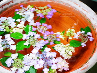 水面に浮かぶ紫陽花の写真・画像素材[2273395]