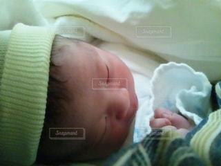 産まれたばかりのいのちの写真・画像素材[2253831]