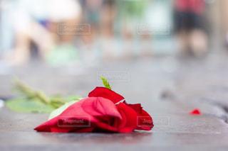 地面に落ちた一輪の薔薇の写真・画像素材[2282420]