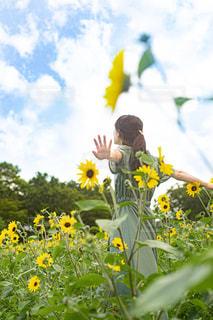 ひまわり畑の中にいる女性の写真・画像素材[2324200]