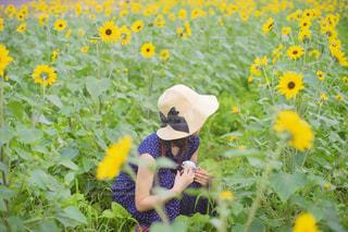ひまわり畑の中でしゃがんでいる女性の写真・画像素材[2324267]