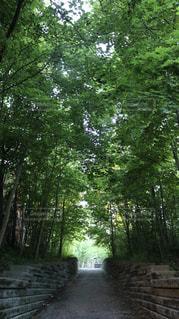 木の写真・画像素材[2239687]