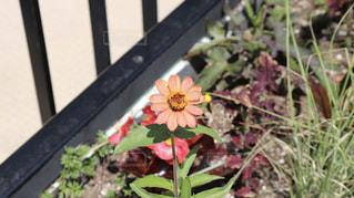 花の写真・画像素材[2242166]