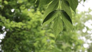 緑の植物のクローズアップの写真・画像素材[2271612]