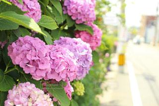 花の写真・画像素材[164410]