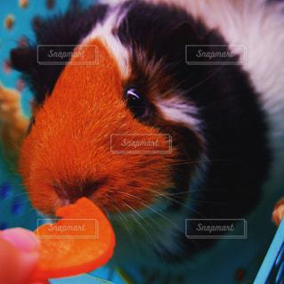 動物の写真・画像素材[2240665]