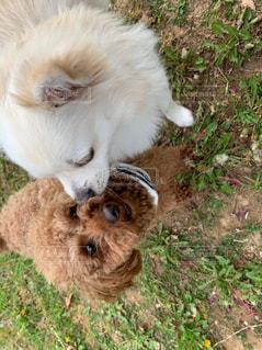 犬の写真・画像素材[2240200]