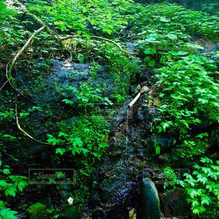 湧水の写真・画像素材[2241802]