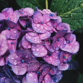 花の写真・画像素材[2242209]