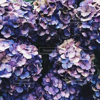 花の写真・画像素材[2242213]