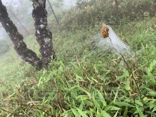 蜘蛛の巣の写真・画像素材[2243612]