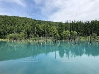 木々に囲まれた水の体の写真・画像素材[4755866]